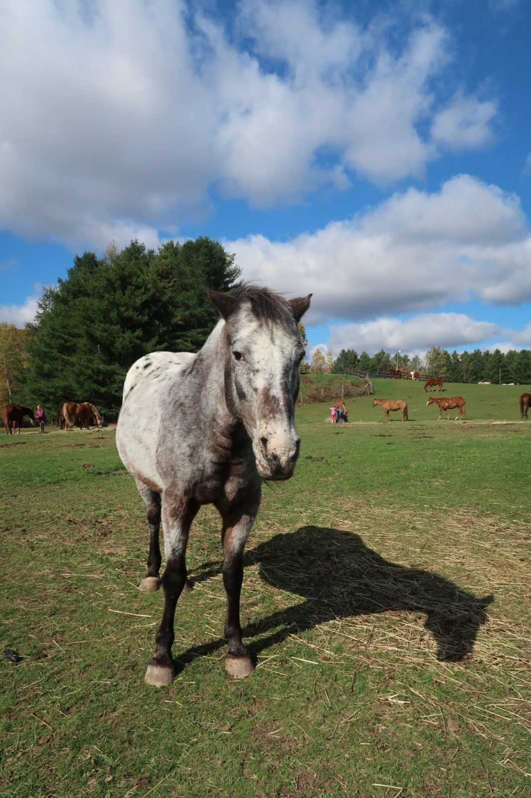 horseback riding in Quebec